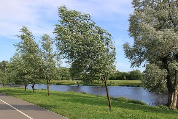 Фотография достопримечательности. Муринский Парк в Санкт-Петербурге
