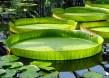 Ботанический сад в Санкт-Петербурге