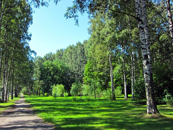 Фотография достопримечательности. Парк Сосновка в Санкт-Петербурге