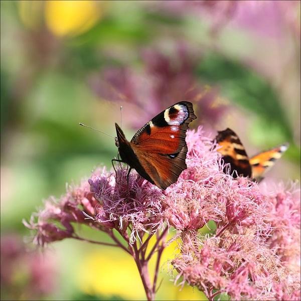 Фотография достопримечательности Ботанический сад